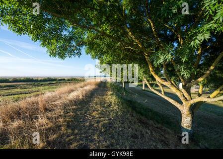 Brouage, fortified town, Charente Maritime, France, EU, Europe - Stock Photo