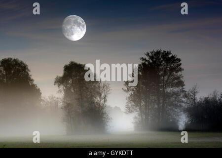 Vollmond ueber im Moor aufsteigendem Bodennebel, Deutschland, Bayern, Grabenstaetter Moor | full moon over ascending - Stock Photo