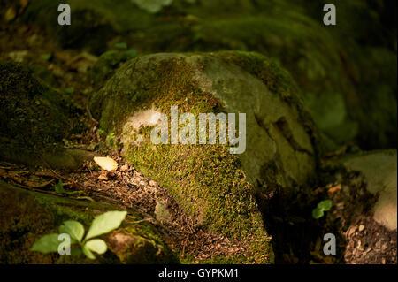 Light rays on a lush green moss. - Stock Photo