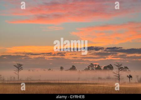 Sunrise, Sawgrass Prairie and Slash Pine Trees (Pinus elliottii), Everglades National Park, Florida USA - Stock Photo