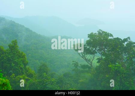 Landschaft entlang der Cape Tribulation Road, Daintree Regenwald, Australien, Queensland, Kimberley | Landscape - Stock Photo