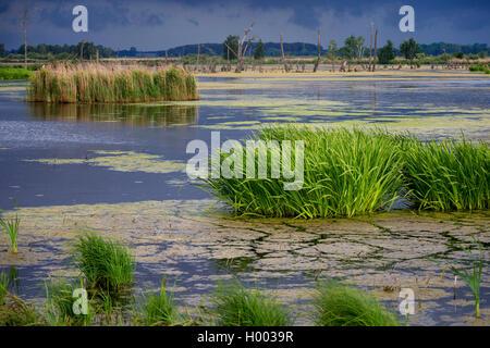 flood area at river Peene, Germany, Mecklenburg-Western Pomerania, Anklam - Stock Photo