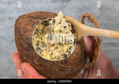 selbstgemachtes Vogelfutter wird in eine Kokosnuss zum Aufhaengen gefuellt   self made birdseeds are filled in coconut - Stock Photo