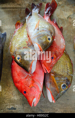 fresh fishes for sale at the Sir Selwyn Selwyn-Clarke fish market in Vicoria, Seychelles, Mahe - Stock Photo