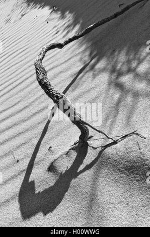 Infinity Symbol Created By The Shadow Effect Of A Root On A Beach