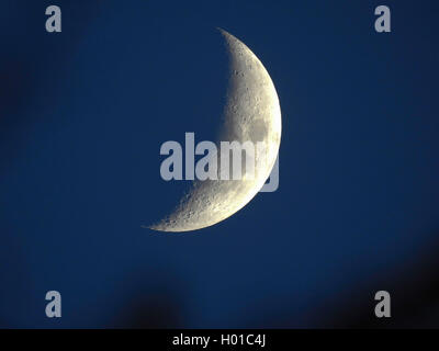 zunehmender Mond, Deutschland, Hamburg | waxing gibbous moon, Germany, Hamburg | BLWS432871.jpg [ (c) blickwinkel/H. - Stock Photo