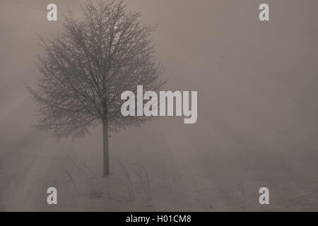 Winterlandschaft im Nebel am Morgen, Deutschland, Mecklenburg-Vorpommern, Biestow, Rostock | winter scenery with - Stock Photo