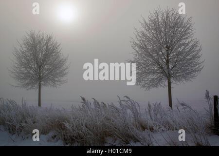 winter scenery with mist in the morning, Germany, Mecklenburg-Western Pomerania, Biestow, Rostock - Stock Photo