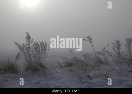 hoar frost at sunrise in mist, Germany, Mecklenburg-Western Pomerania - Stock Photo