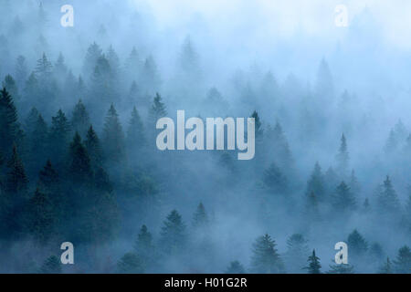 morning mist over the Black Forest, Germany, Baden-Wuerttemberg, Black Forest, Schauinsland - Stock Photo
