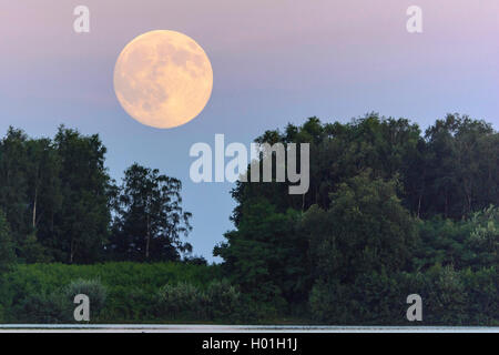 Vollmond ueber dem Dammer Bergsee, Deutschland, Niedersachsen, Damme | full moon over forest, Germany, Lower Saxony, - Stock Photo