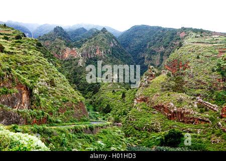 laurel forest in the mountains near La Galga, Canary Islands, La Palma - Stock Photo