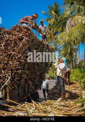 HAMPI, INDIA - 28 JANUARY 2015: Indian workers loading sugarcane on truck - Stock Photo