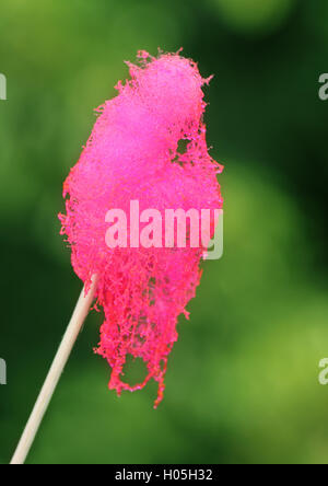 how to make cotton candy on a stick