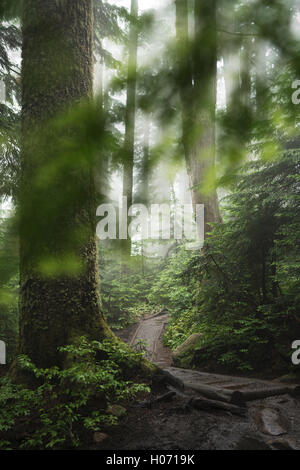 A forest trail on the Pilchuck hike near Seattle, Washington. - Stock Photo