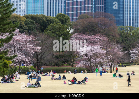 People relaxing and picnicking amongst the beautiful cherry blossom in Tokyo Imperial Palace East Gardens, Tokyo, - Stock Photo