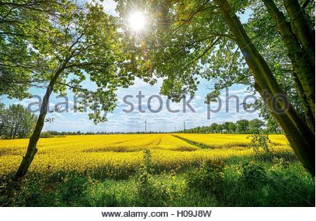 BLWX071369 [ (c) blickwinkel/McPHOTOx/Christian Ohde Tel. +49 (0)2302-2793220, E-mail: info@blickwinkel.de, Internet: - Stock Photo