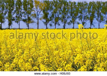 BLWX071371 [ (c) blickwinkel/McPHOTOx/Christian Ohde Tel. +49 (0)2302-2793220, E-mail: info@blickwinkel.de, Internet: - Stock Photo