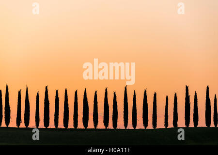 Cypress trees at sunrise, San Quirico d'Orcia, Val d'Orcia, Tuscany, Italy - Stock Photo