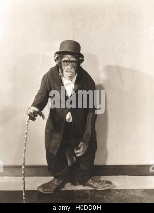 Monkey dressed in tight overcoat and bowler hat - Stock Photo