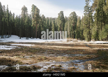 A small stream running through California's Sequoia National Park - Stock Photo
