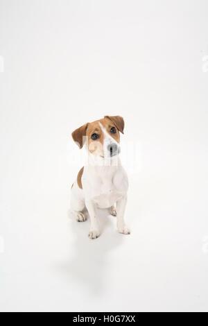 Cute funny dog pet on white background - Stock Photo