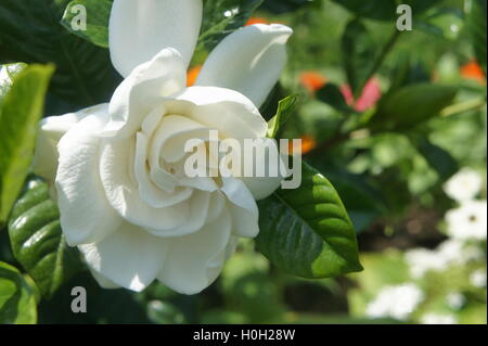 Close up image of a flower - Stock Photo