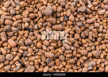 Heat expanded clay pebbles used as a growing media in hydroponics. Background close up of pellets. - Stock Photo