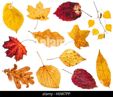 collage from various yellow and red autumn leaves isolated on white background - Stock Photo