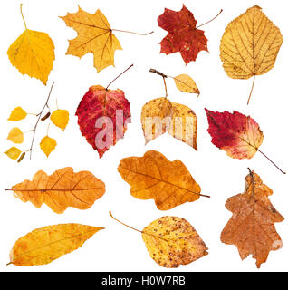 collage from various fallen leaves isolated on white background - Stock Photo