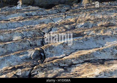 Unique Ocean Floor fossil on Flat Holm Island - Stock Photo