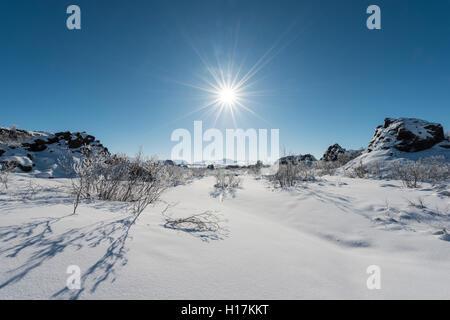 Sun shining on snowy bushes, lava field covered in snow, Krafla volcanic system, Dimmuborgir National Park, Mývatn, - Stock Photo