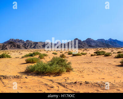 Green bushes in the desert of Wadi Rum, Jordan - Stock Photo