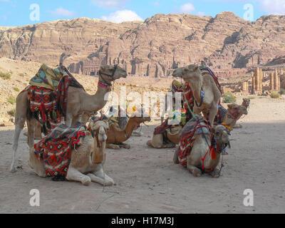 Camels waiting for tourists, Petra in Jordan - Stock Photo