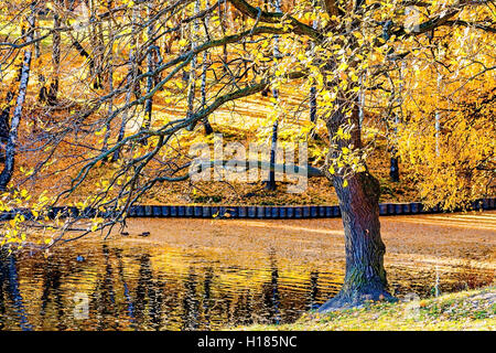Old oak tree by the pond or lake late in autumn. Some yellow leaves are left on the branches. The thick golden layer - Stock Photo