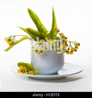 Yellow linden flowers and green leaves in a white teacup which stands on a white saucer. Isolated against white - Stock Photo