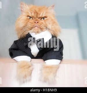 Low angle portrait of Persian cat sitting on table - Stock Photo