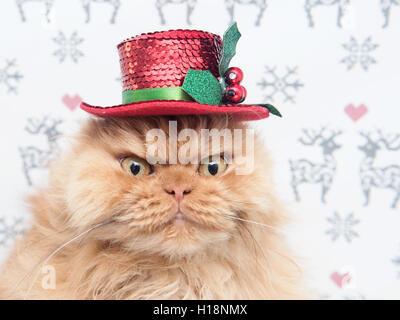 Persian cat wearing top Christmas hat - Stock Photo