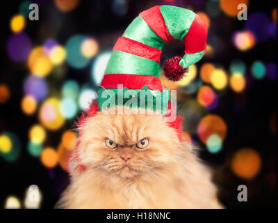 Persian cat wearing holiday elf hat - Stock Photo