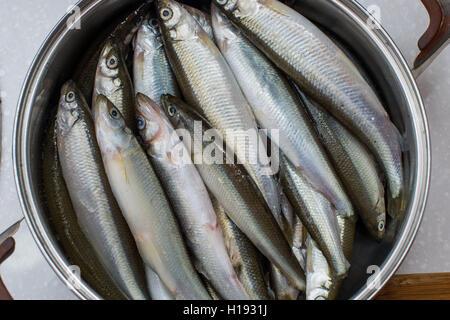 smelt fishes on white background - Stock Photo