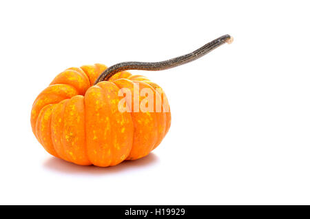 Ornamental pumpkin or gourd on white background - Stock Photo