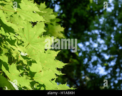 Morning sunlight filters through the leaves of a large green tree with dark copyspace area for gardening based designs. - Stock Photo