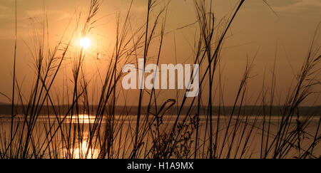 Setting sun sinks over a lake as the sunlight filters through wild growing weeds and grasses. - Stock Photo
