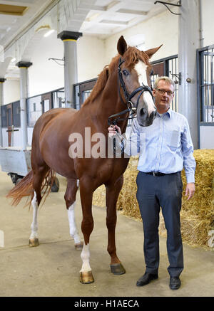 Celle, Germany. 16th Sep, 2016. Axel Brockmann, state stableman from the Lower Saxon state stud Celle, stands in - Stock Photo