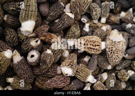 Morel mushrooms at a local farmers market in Summit, New Jersey, USA  Foraged in forests - Stock Photo
