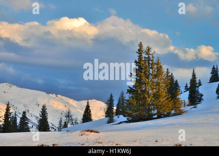 Winter landscape, snow-covered mountains with spruce trees, Karwendel, Loassattel, Schwaz, Tyrol, Austria - Stock Photo