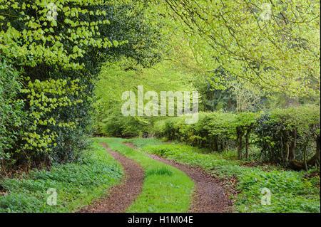 Buchenwald, Forstamt Ahlhorn, Herrenholz, Landkreis Vechta, Oldenburger Muensterland, Niedersachsen, Deutschland - Stock Photo