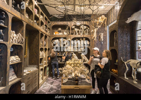 Macy's Halloween concept shop, a partnership with Grandin Road, a ...