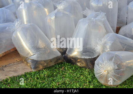 Fishes are kept in plastic bags
