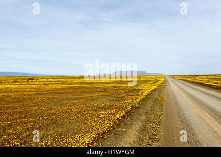 Yellow and Brown fileds with a road leading to Tankwa Karoo - Stock Photo